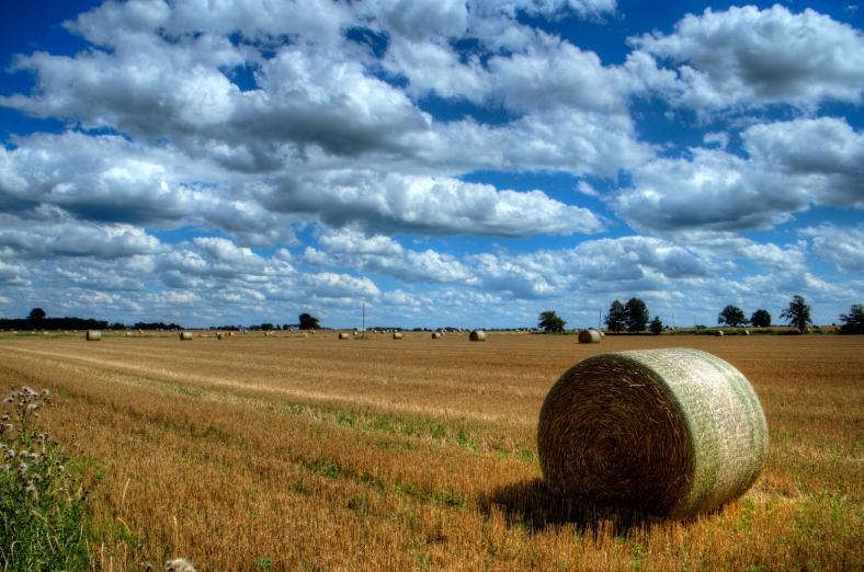 Hay Bales in Field 2a