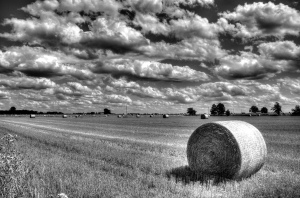 Hay Bales in Field 3