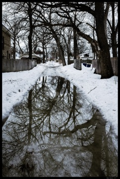 Trees mirrored in a back alley puddle