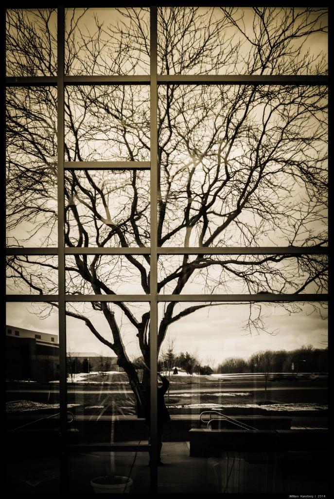 Tree in Mirrored Windows