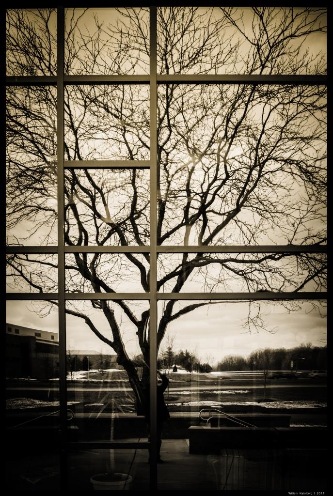 Tree in Mirrored Windows