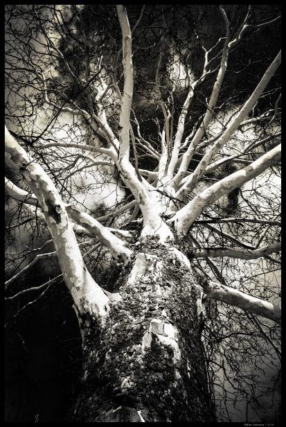 White Tree III