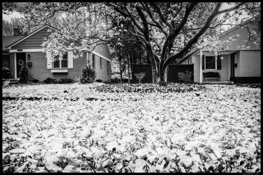 Magnolia Leaves After the Rain III