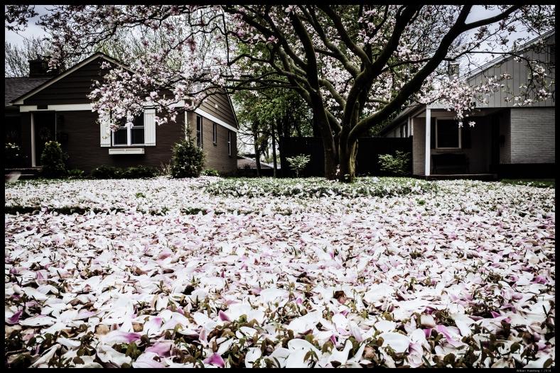 Magnolia Leaves After the Rain V