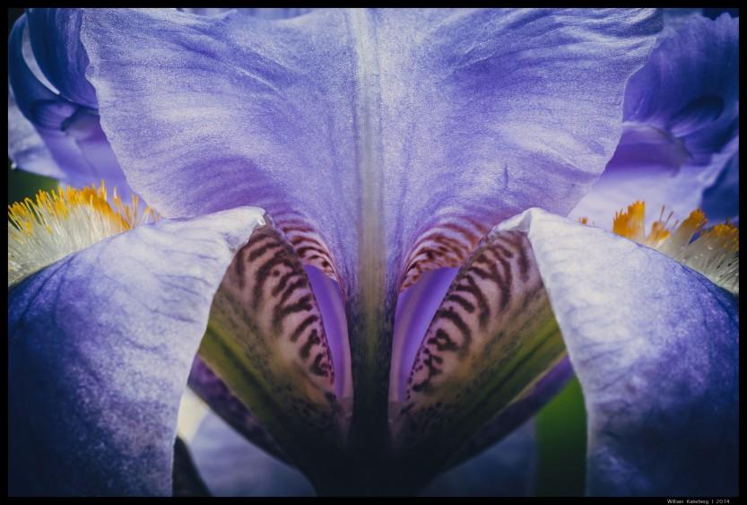 Purple Flower sm