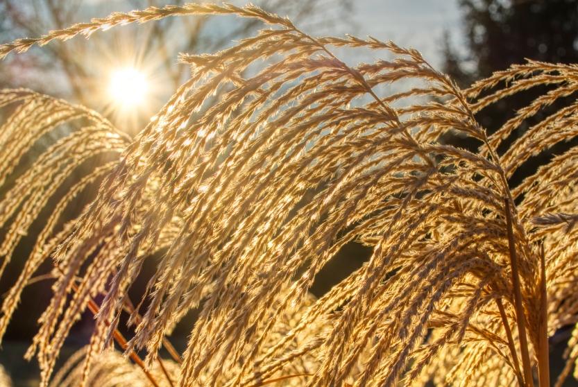 sunburst lum cropped