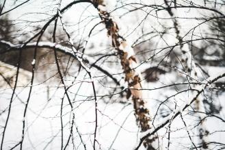 Snow Tree-2small