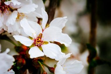 Satirdau flowers-1