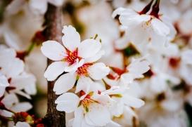 Satirdau flowers-2