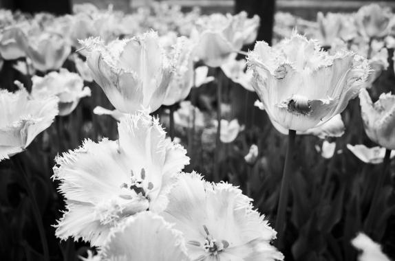 graduation flowers-1
