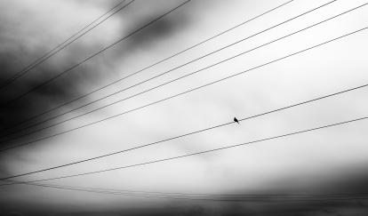 brid on wire-2