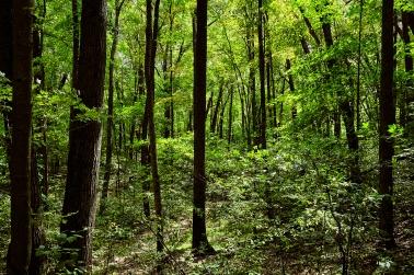 warm forest C1