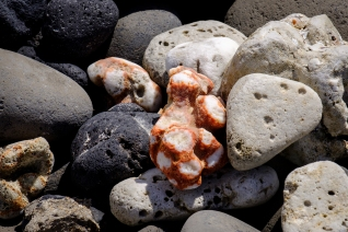 coral living to dead in lava field