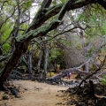 Trees in lavafield