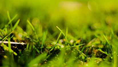 grasses-2 sm