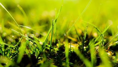grasses-5 sm
