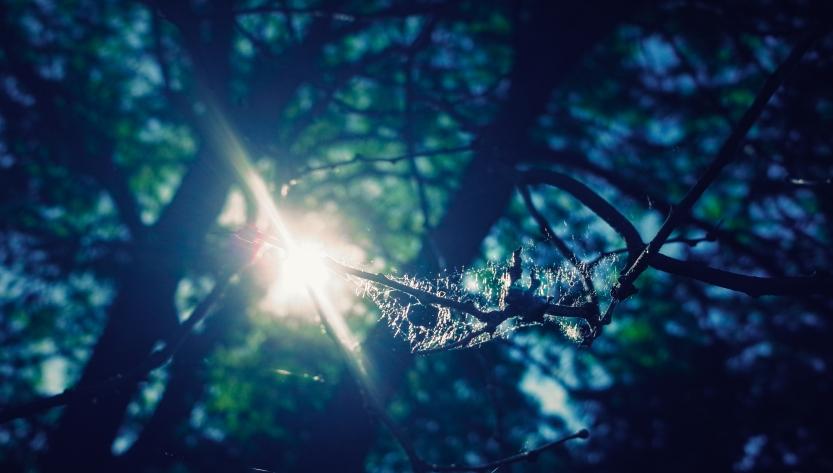 web light-2