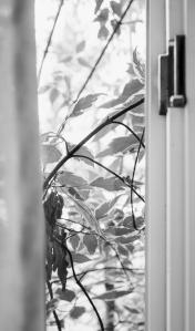 leaves window LR